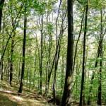 Wandern in den Knetzbergen kurz vor Zell am Ebersberg